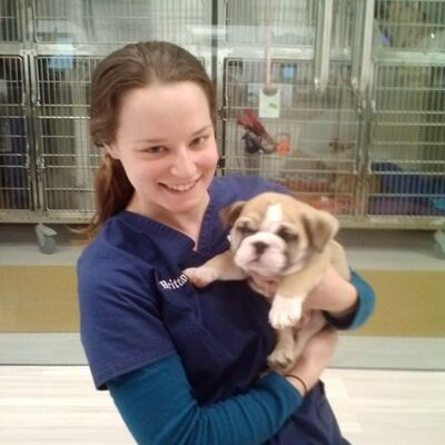 A team member holding a tan and white bulldog puppy