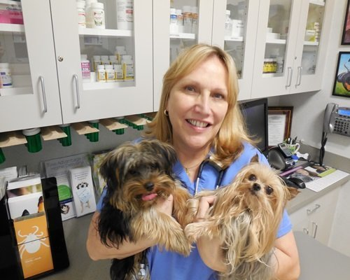 A team member holding two small brown terriers