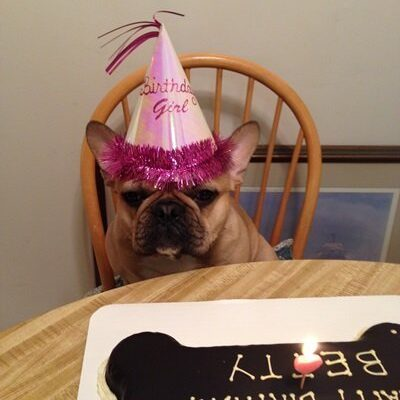 A brown french bulldog with a party hat on who is celebrating her birthday