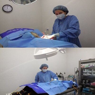 Two photos of a vet performing a surgery on a pet