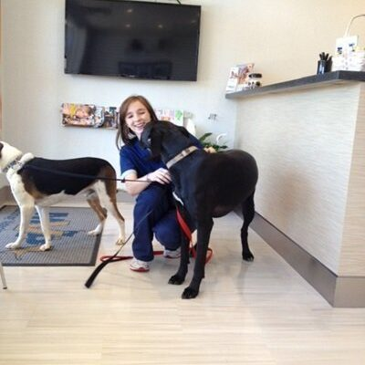 A team member petting two dogs in the reception area of the office