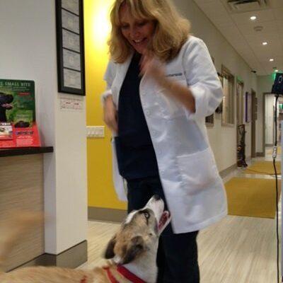 A veterinarian smiling down at a dog