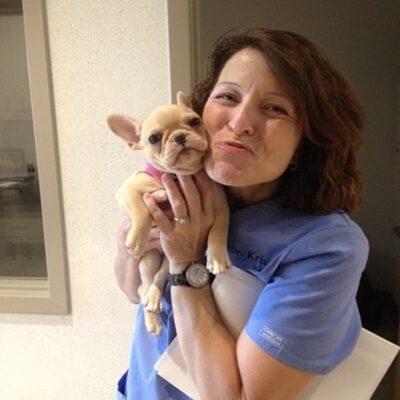 The veterinarian holding a tiny tan french bulldog puppy