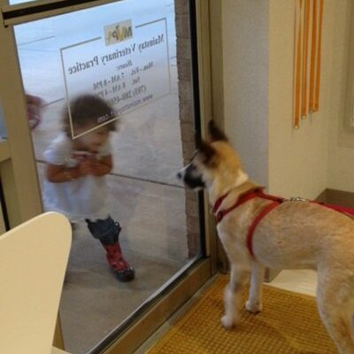 A little girl looking at a medium sized dog through the window