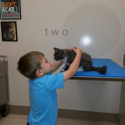 A little boy looking at his kitten who is on a table